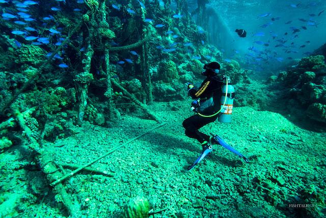 Brothers Islands, fishtale.ro, fotografie subacvatica, fotografia subacvatica